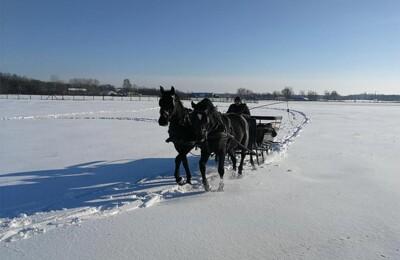 erdospuszta-club-hotel-elmenypark-allatfarm-gallery-15.jpg